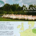 京都西川羽毛布団ホワイトグースkn-p93d